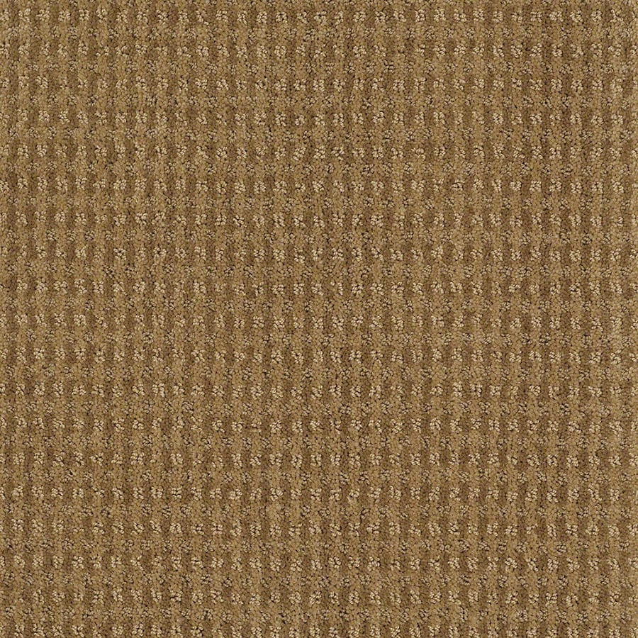 STAINMASTER St John Active Family Starfish Cut and Loop Carpet Sample