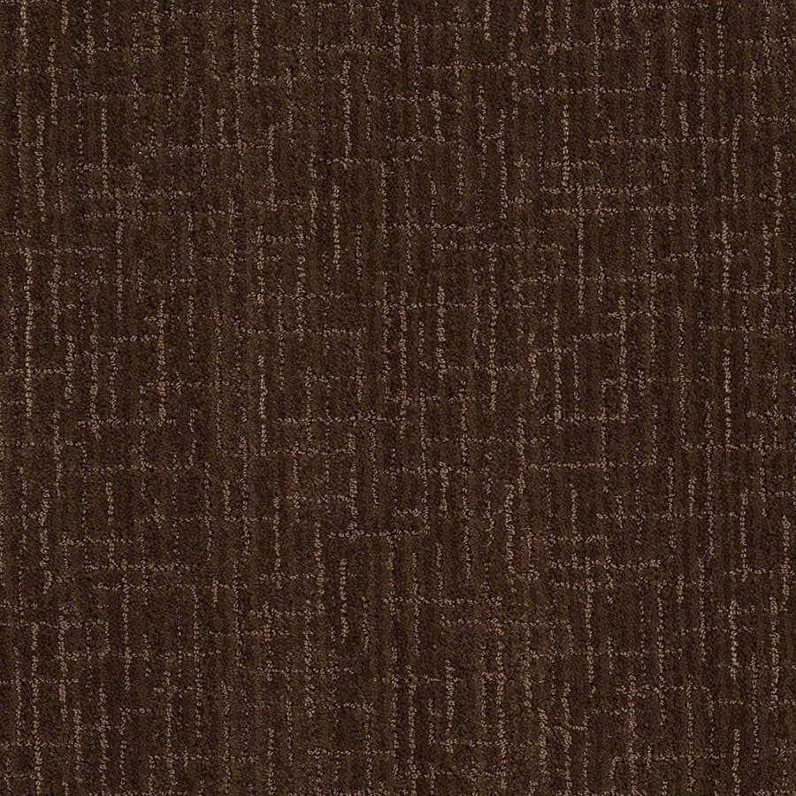 STAINMASTER Unquestionable Active Family Coffee Bean Cut and Loop Carpet Sample