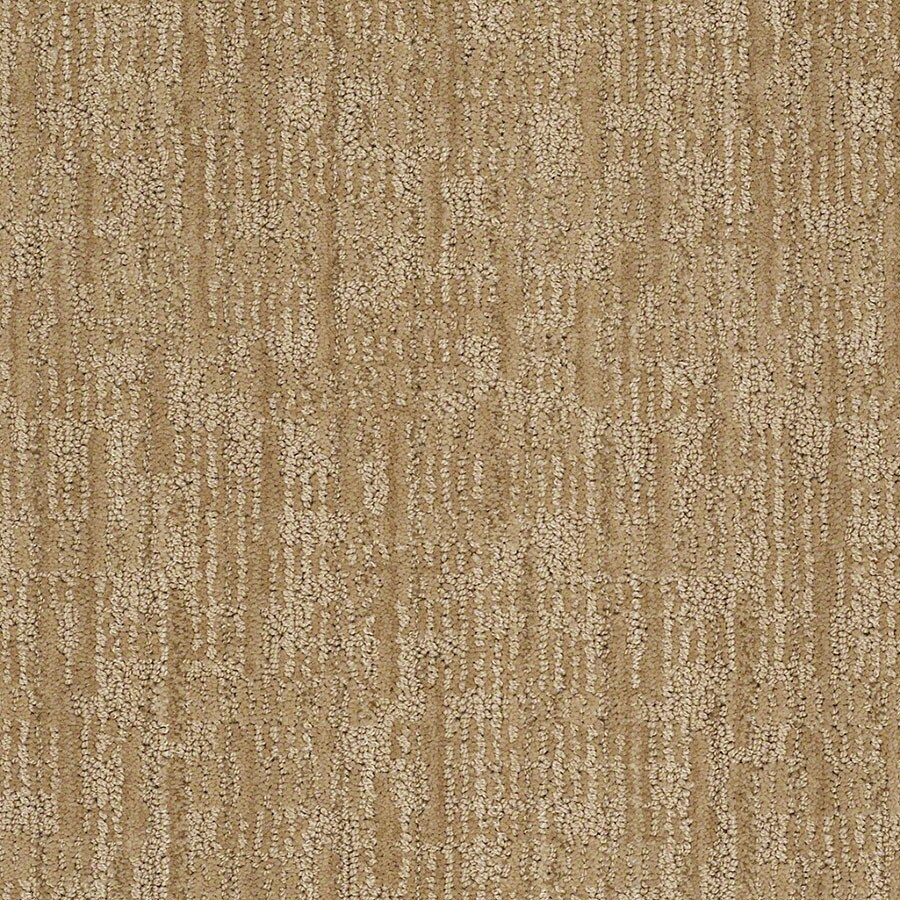 STAINMASTER Unmistakable Active Family Biscuit Cut and Loop Carpet Sample