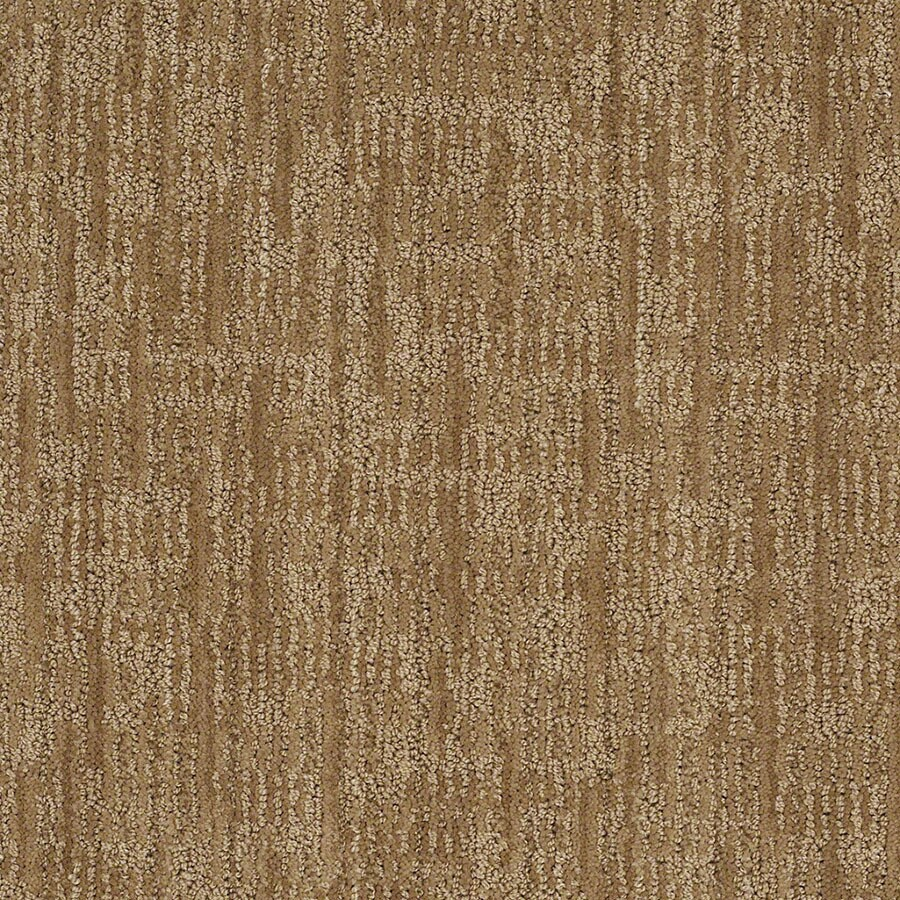 STAINMASTER Unmistakable Active Family Curry Cut and Loop Carpet Sample