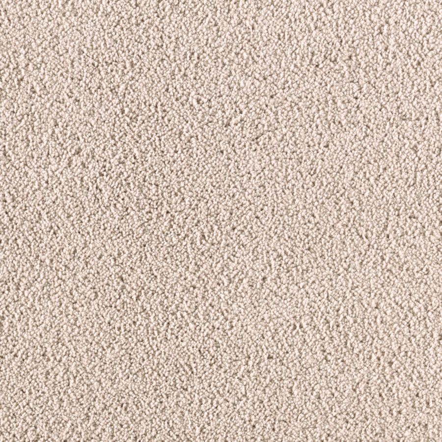STAINMASTER Renewed Touch I Essentials Cross The Line Plus Carpet Sample