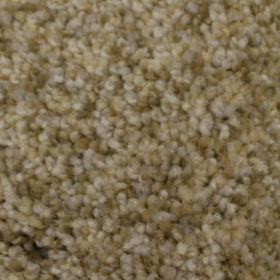 STAINMASTER Side Kick Petprotect Admiration Plus Carpet Sample