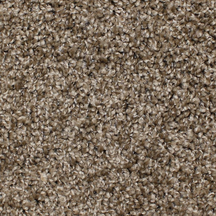 STAINMASTER Conway Essentials Desert Wildlife Plus Carpet Sample