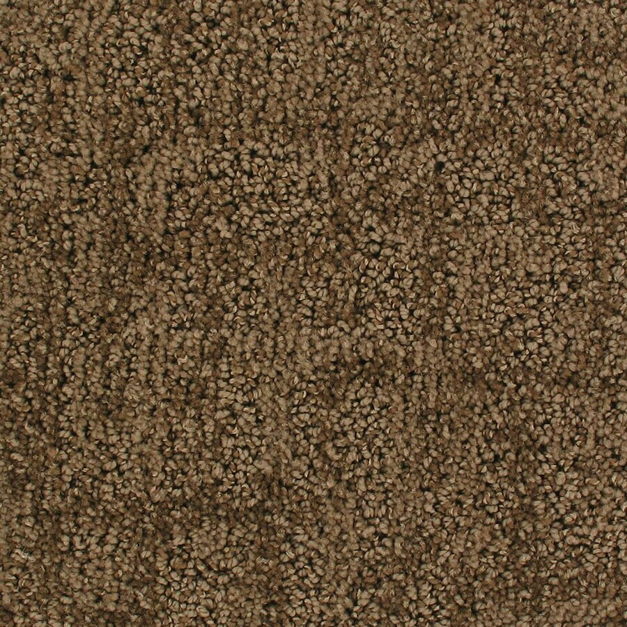 STAINMASTER Galaxy Active Family Flyby Cut and Loop Carpet Sample