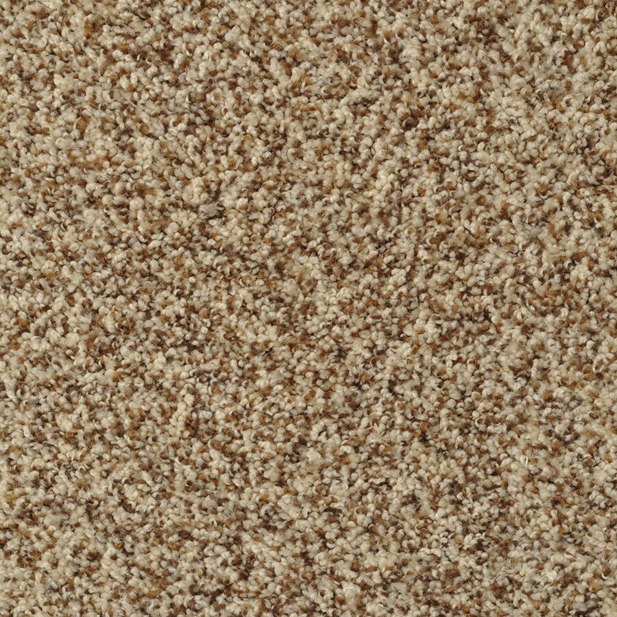 STAINMASTER On Broadway Active Family French Toast Plus Carpet Sample