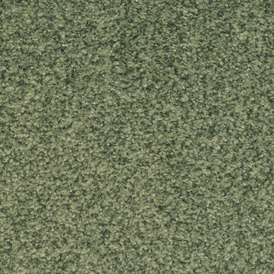 STAINMASTER Special Occasion Active Family Electra Plus Carpet Sample