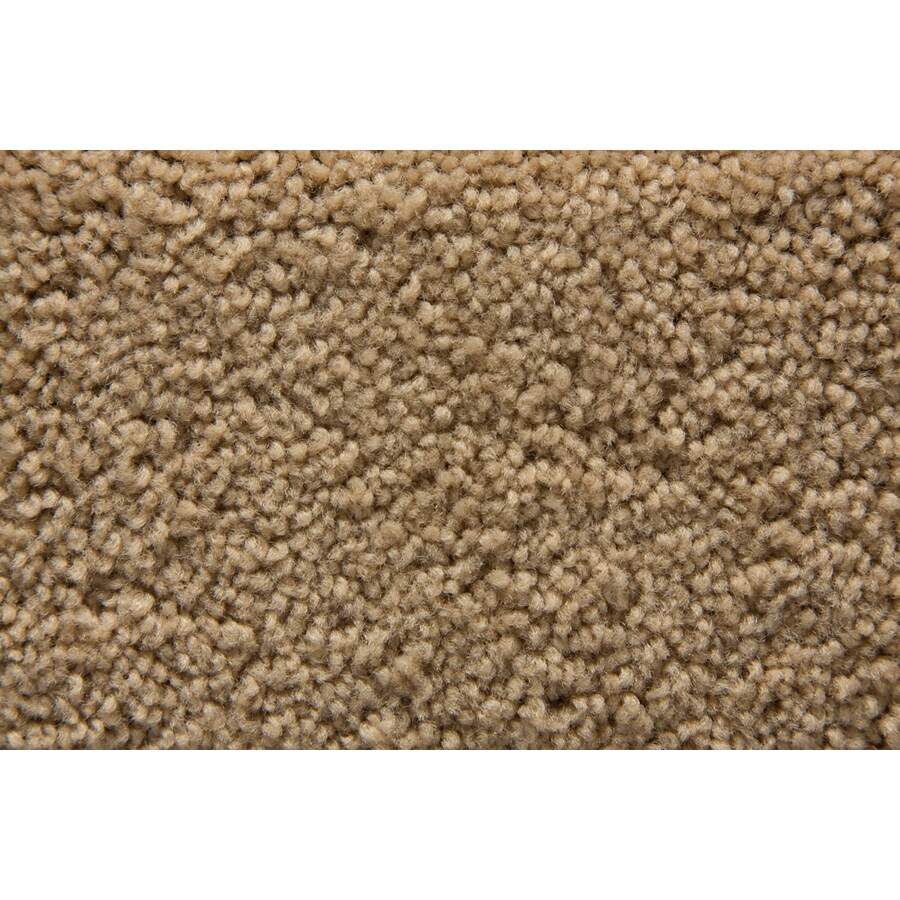 STAINMASTER Savoy Active Family Eagle Plus Carpet Sample