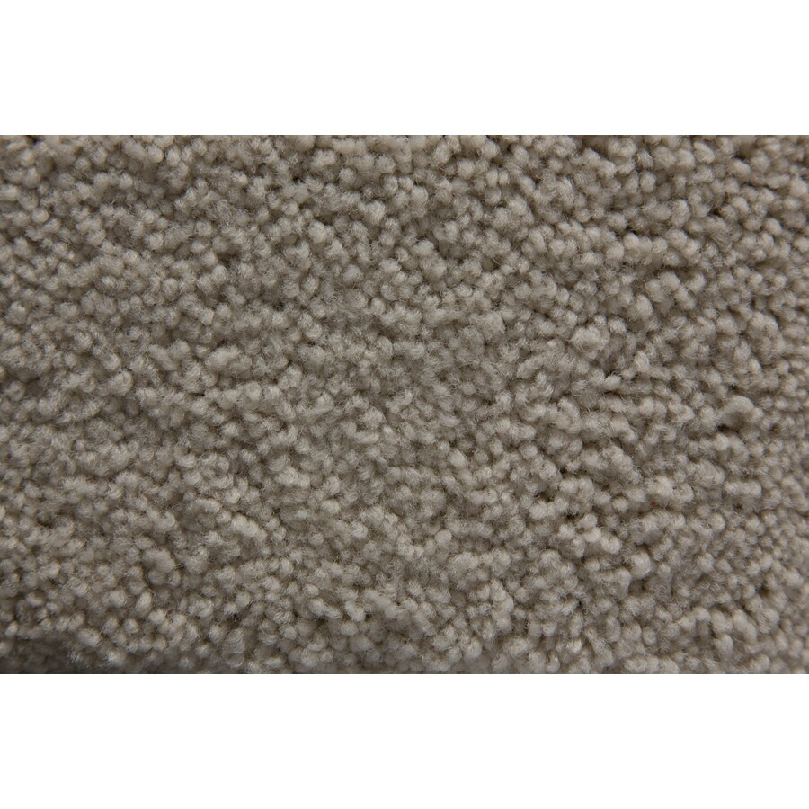 STAINMASTER Savoy Active Family Angel Plus Carpet Sample