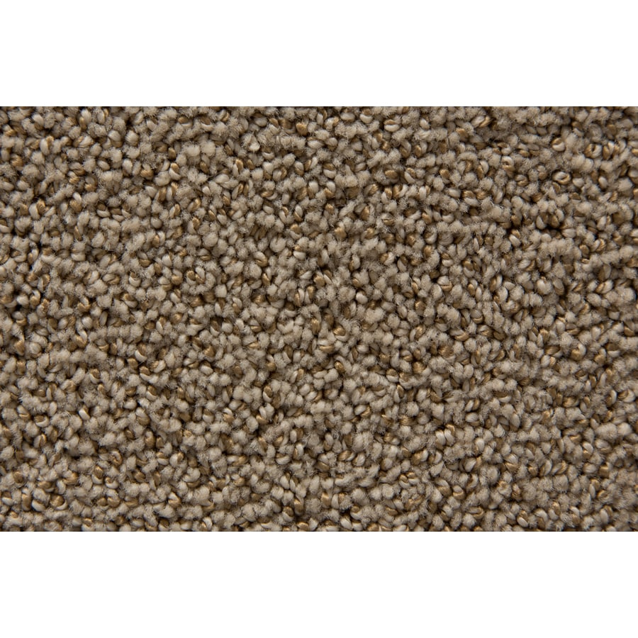 STAINMASTER Mysterious TruSoft Lantana Cut and Loop Carpet Sample