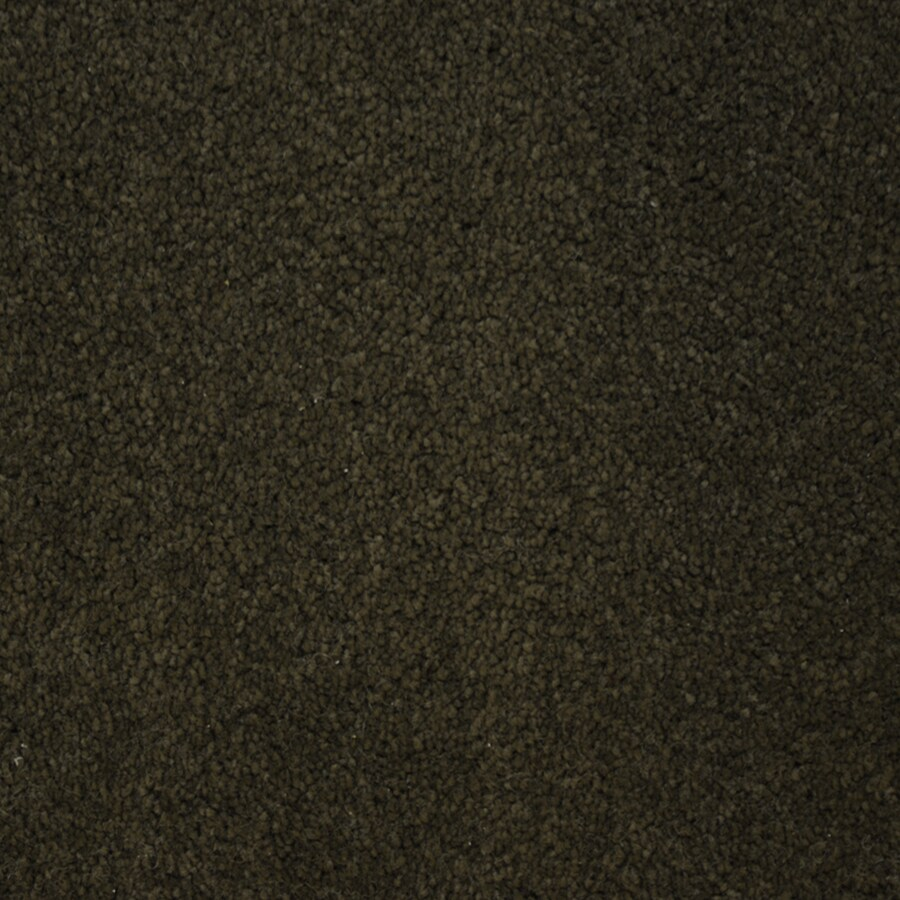 STAINMASTER Purebred Petprotect Breed Plus Carpet Sample