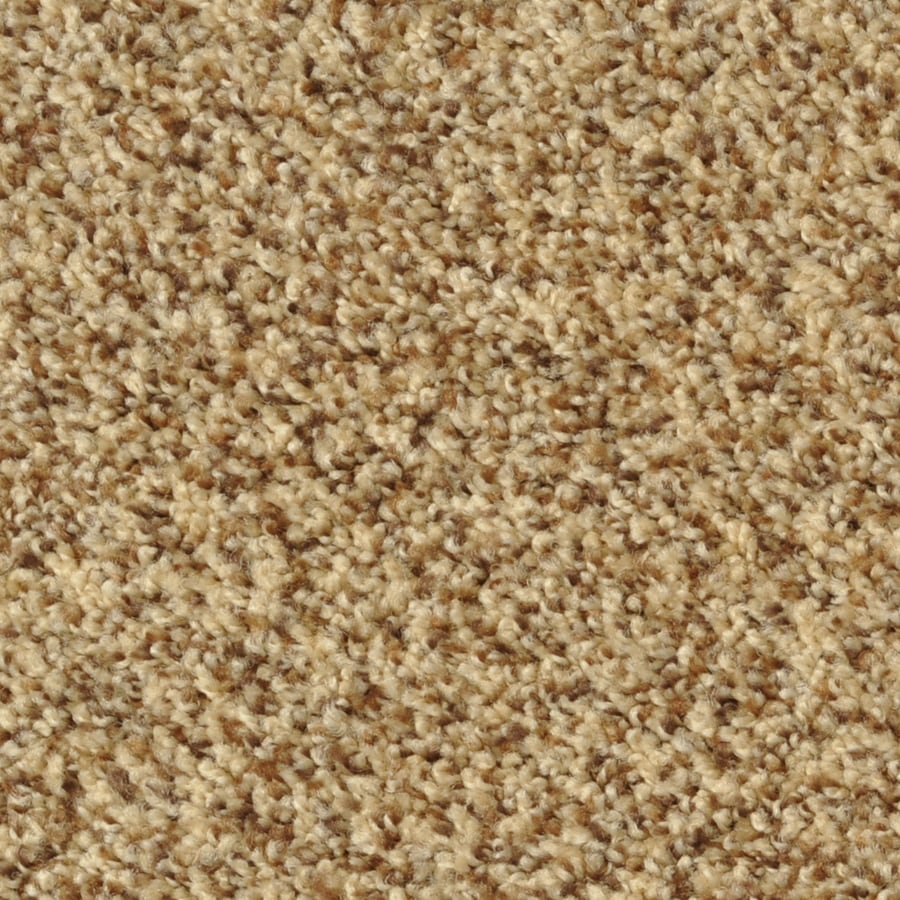 Dixie Group Active Family Maple Springs Tuscany Frieze Indoor Carpet