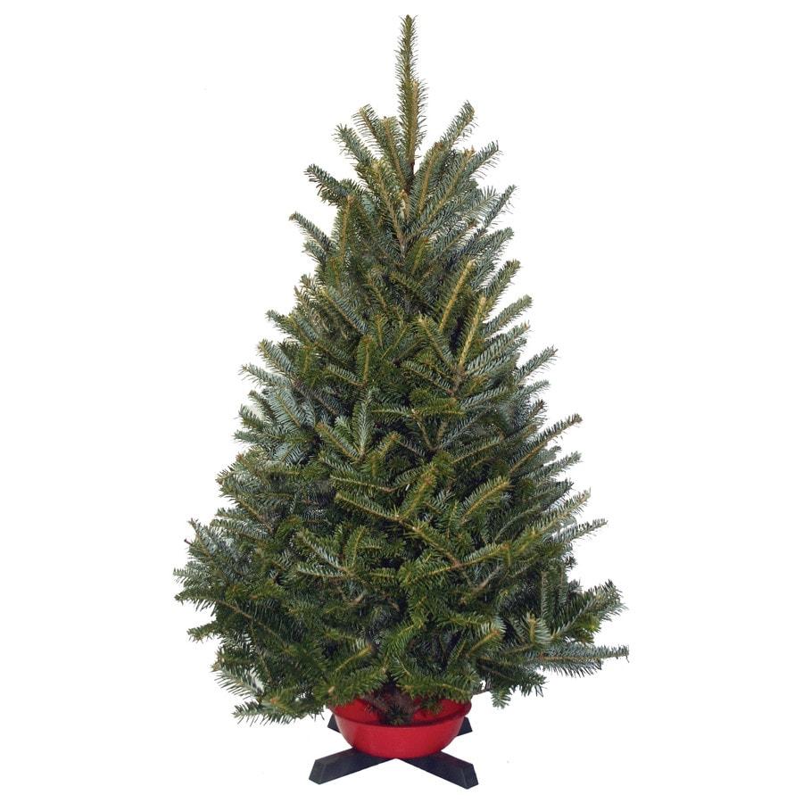 3-4-ft Fresh-Cut Fraser Fir Tabletop Christmas Tree