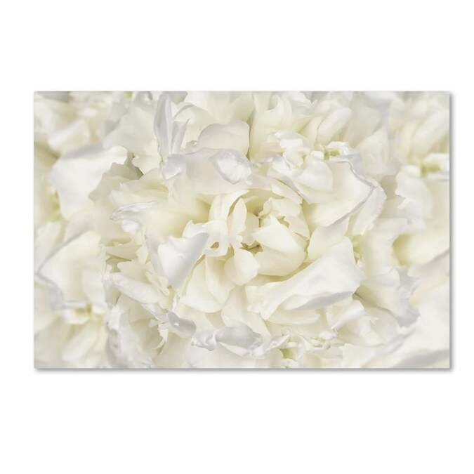 Trademark Fine Art Floral Framed 19 In H X 12 In W Floral Canvas Print In The Wall Art Department At Lowes Com