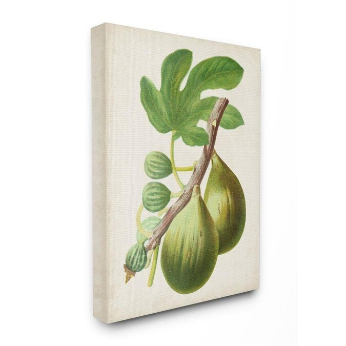 Stupell Industries Vintage Fruit Fig Painting Frameless 30 In H X 24 In W Vintage Retro Canvas Print In The Wall Art Department At Lowes Com