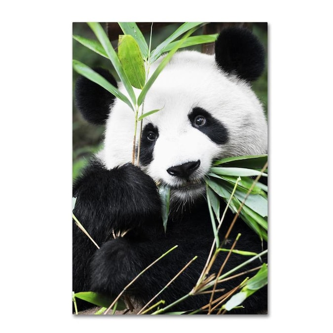 Trademark Fine Art Animals Framed 19 In H X 12 In W Animals Canvas Print In The Wall Art Department At Lowes Com