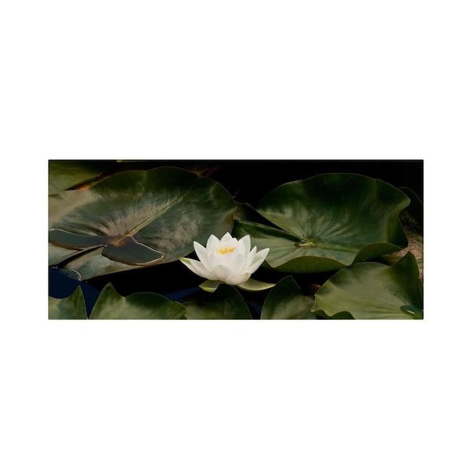 Trademark Fine Art Kurt Shaffer Zen Lily 10x24 Canvas Art In The Wall Art Department At Lowes Com
