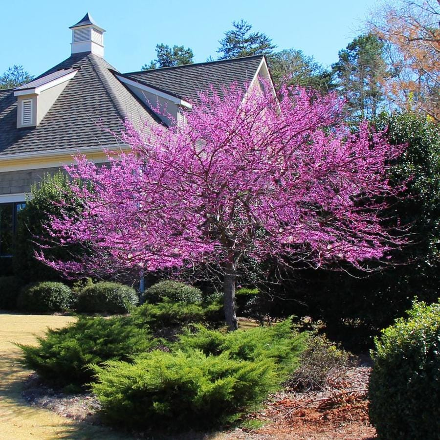Brighter Blooms 2 06 Quart Eastern