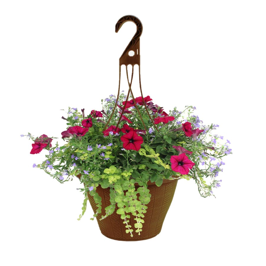 2.17-Gallon Planter Mixed Annuals Combinations