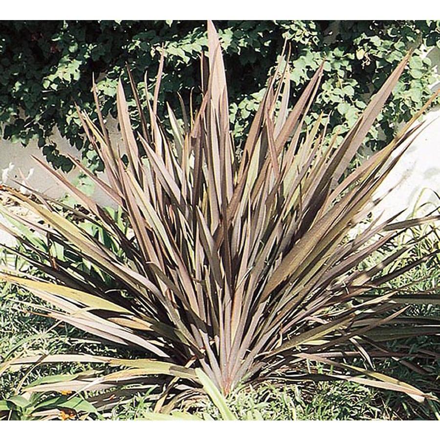 3.25-Gallon New Zealand Flax (L11837)