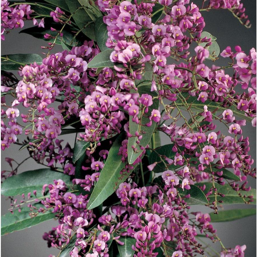 2.5-Quart Vine Lilac (L10538)