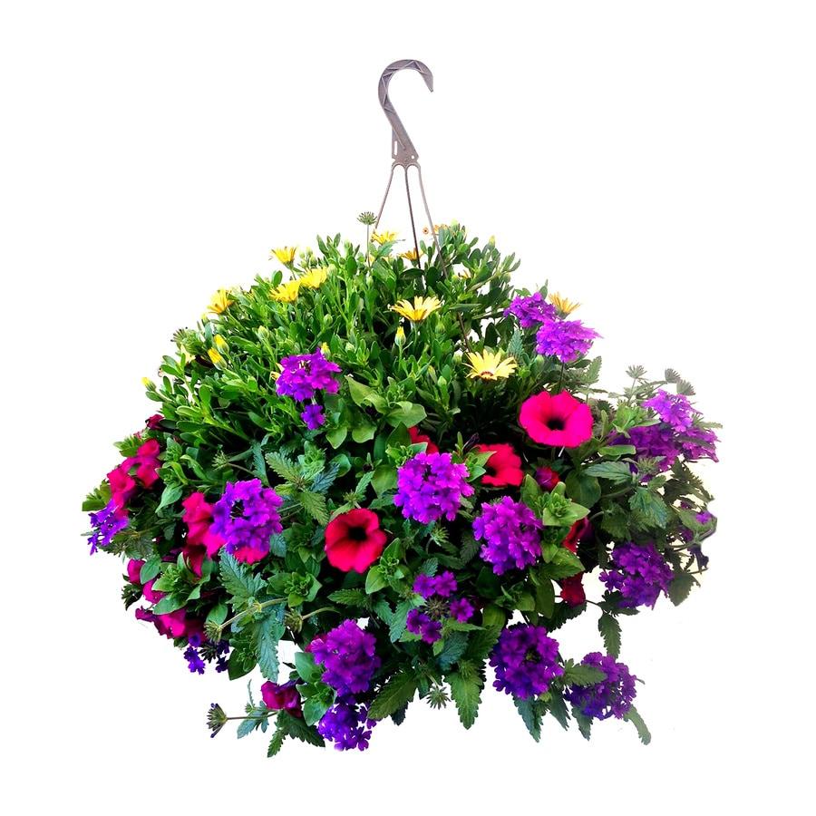 1.25-Gallon Hanging Basket Combo