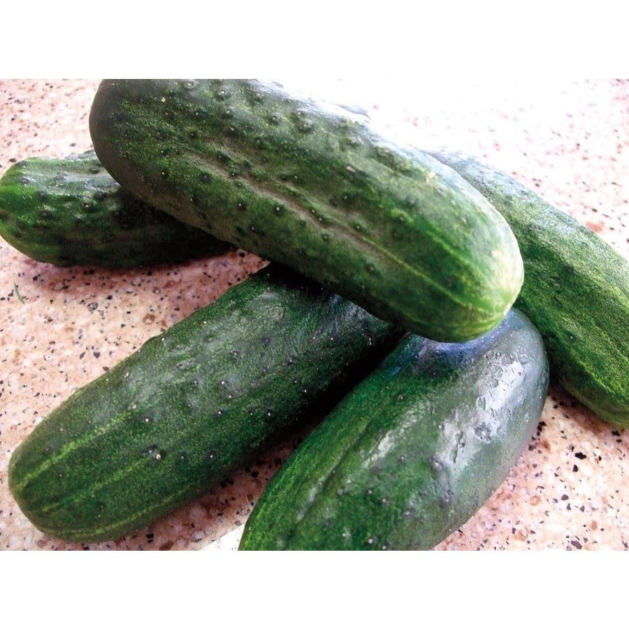 Ferry-Morse Green Dragon Hybrid Cucumber Plant (Lsp0083)