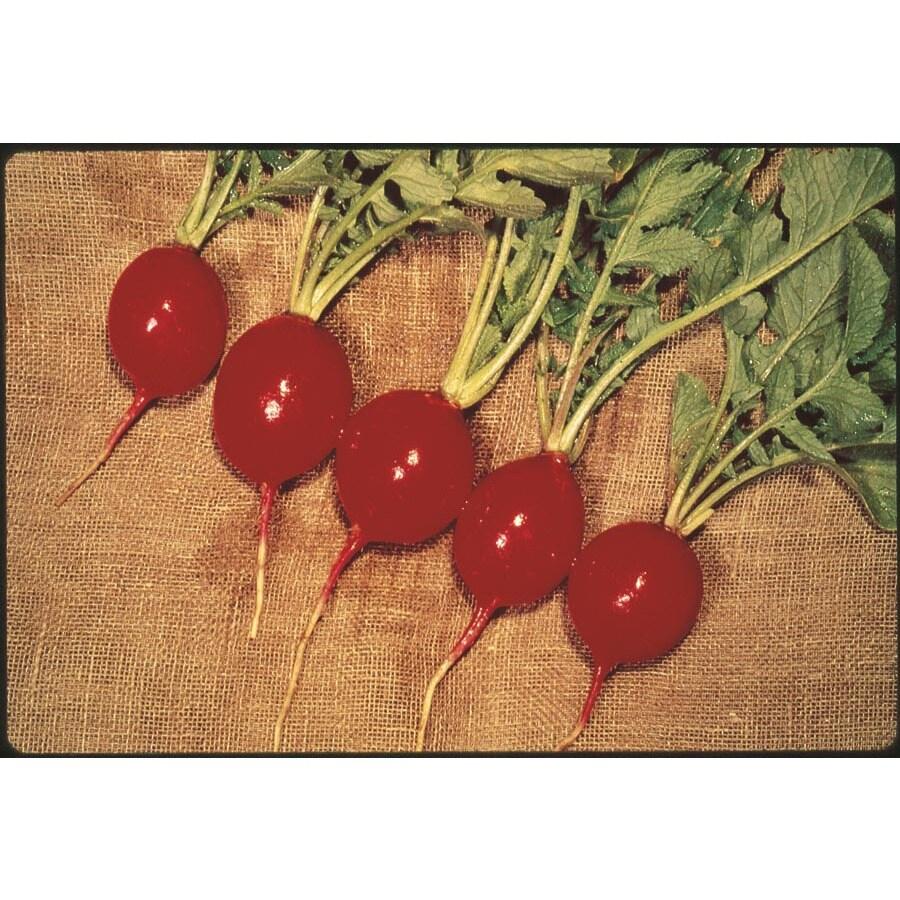 Ferry-Morse Red Silk Radish Plant (Lsp0208)