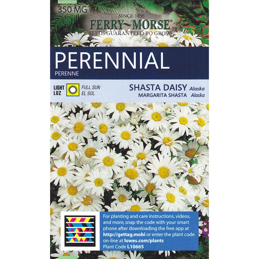 Shop ferry morse shasta daisy alaska flower seed packet at lowes ferry morse shasta daisy alaska flower seed packet izmirmasajfo
