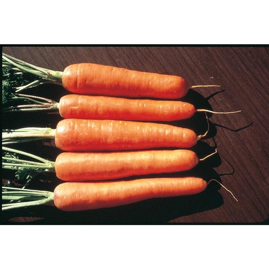 Ferry-Morse Scarlet Nantes Carrot Plant (L20284)