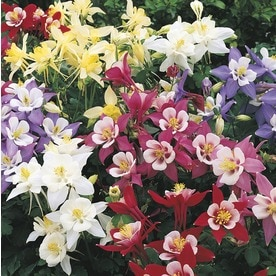 2.5-Quart Pot Columbine (L4950)