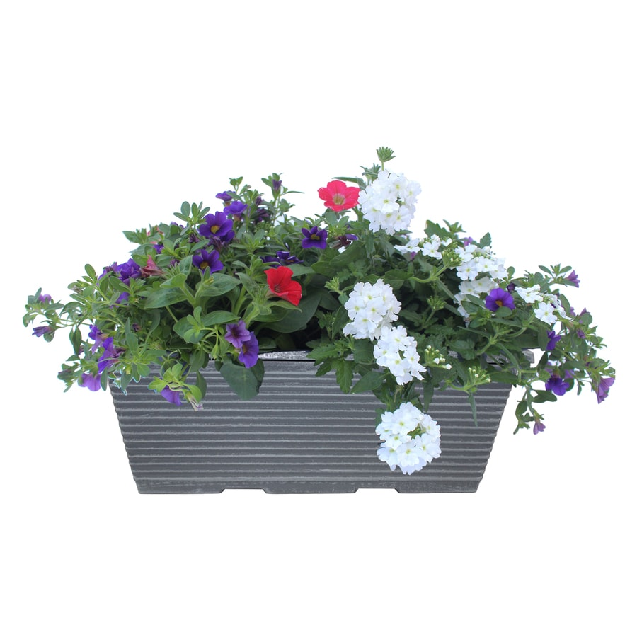 1.5-Gallon Planter Combo