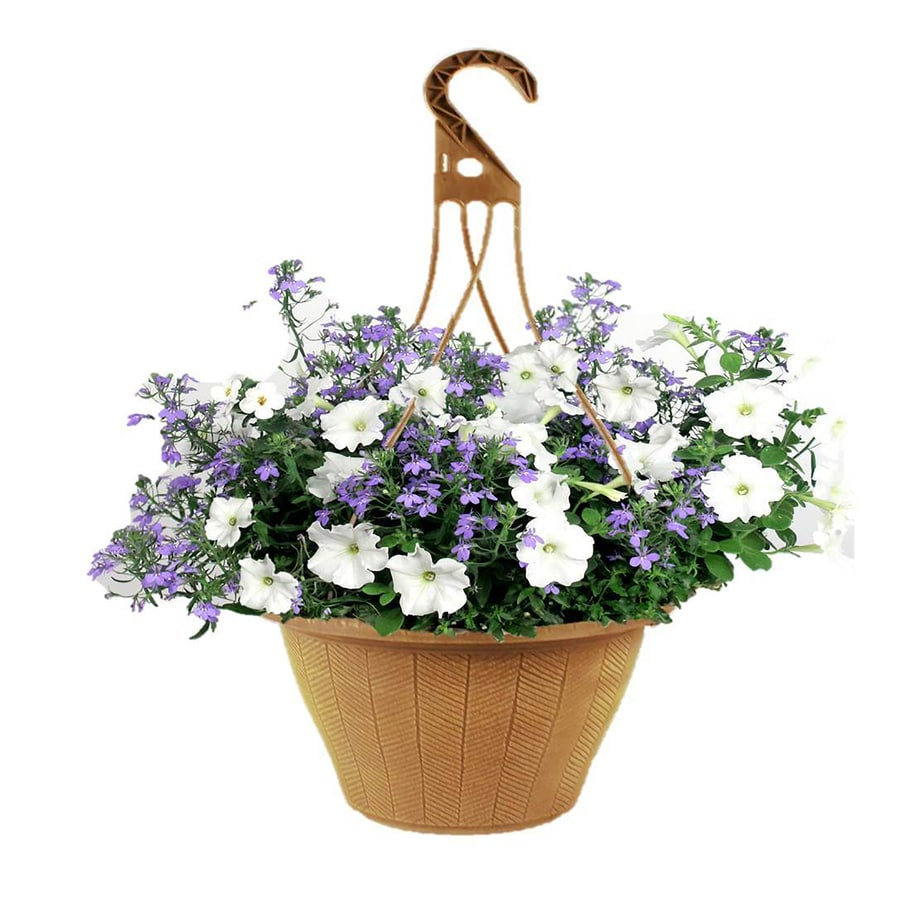 2-Gallon Hanging Basket Combo