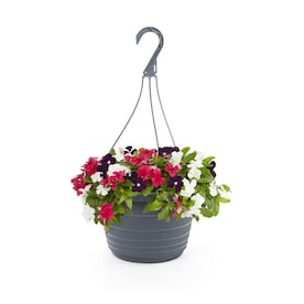 1.5-Gallon Multicolor Red, White and Blue Vinca in Hanging Basket (Lw00533)