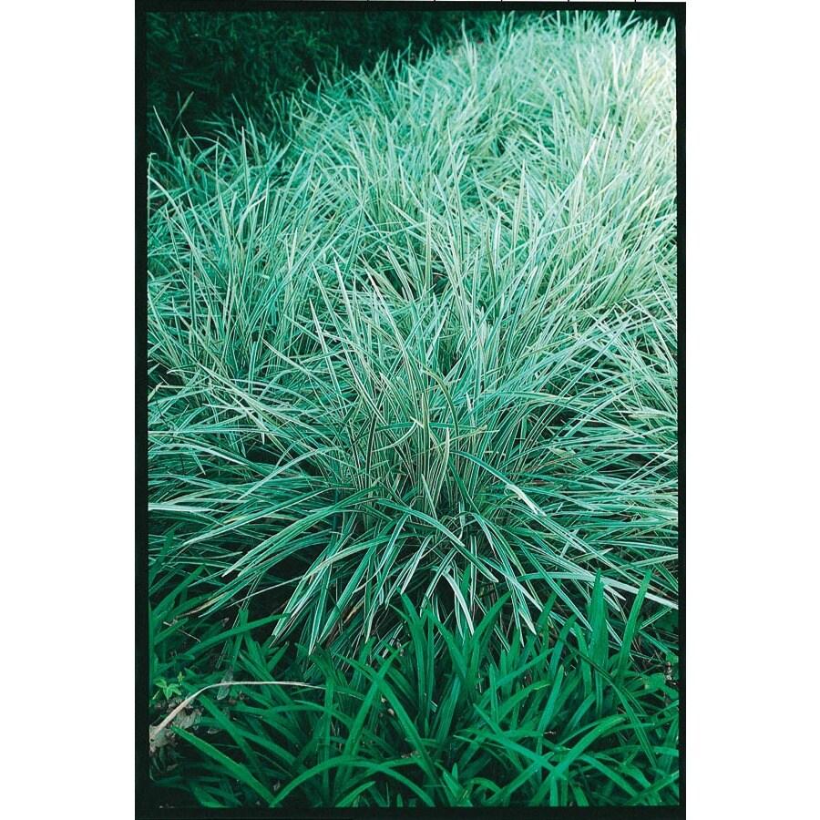 2.5 Quart(S) Aztec Grass (L14234)