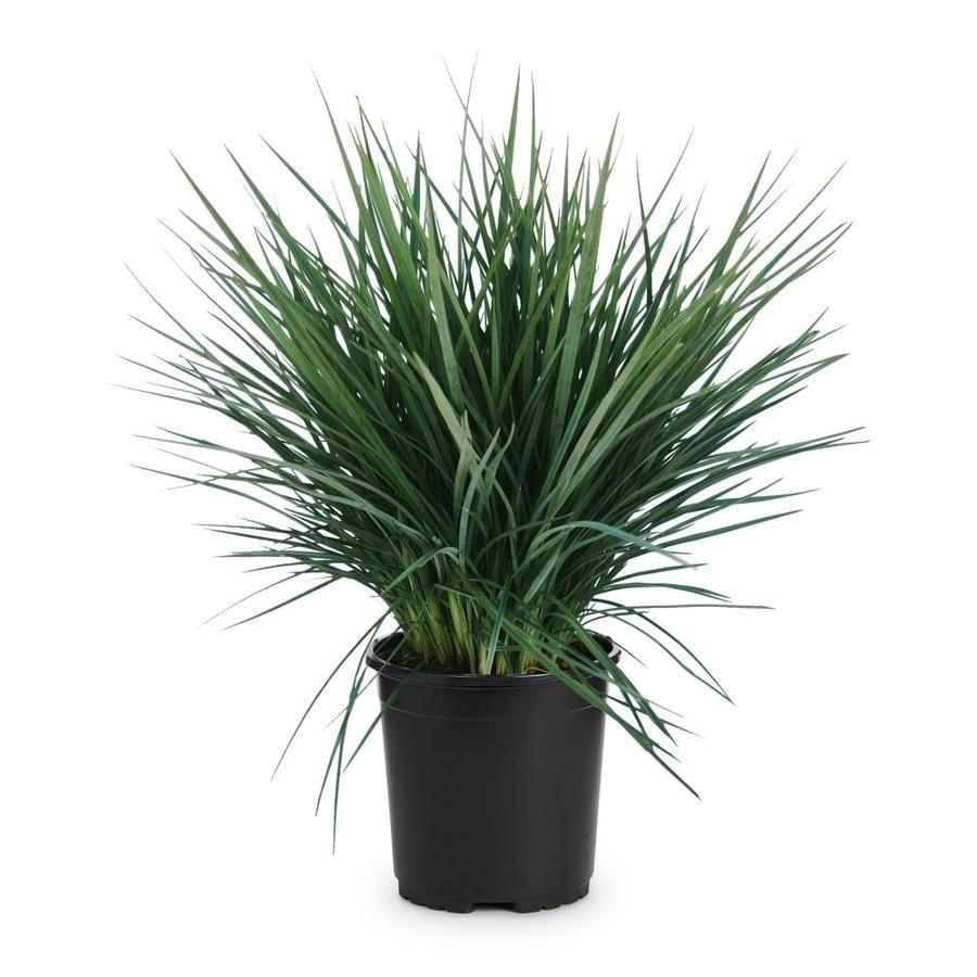 2.5-Quart Flax Lily (L20613)
