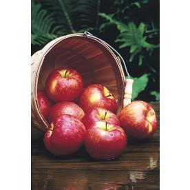 Fruit Plants at Lowes com