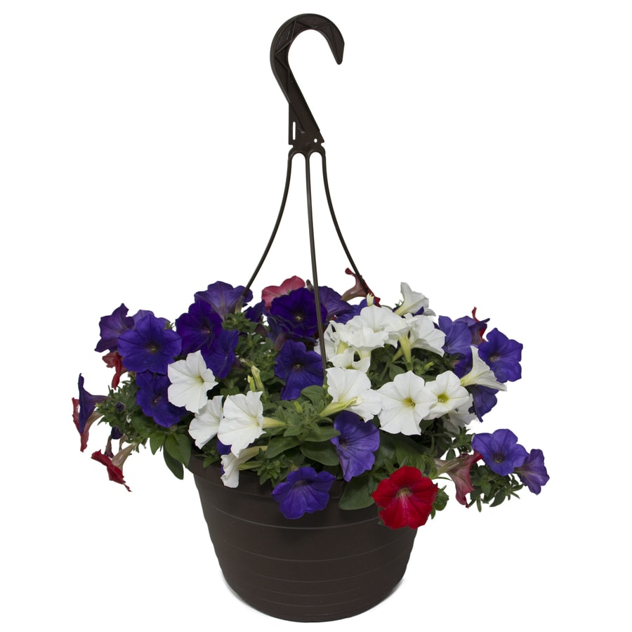Hanging Flower Baskets At Lowes : Gallon combo at lowes