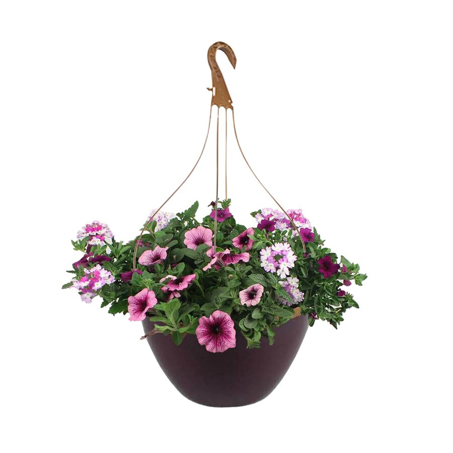 2-Gallon Hanging Basket Mixed Annuals Combinations
