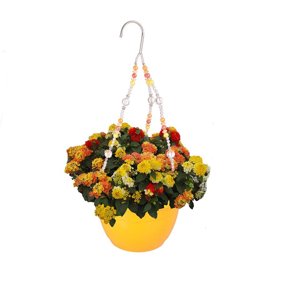 1.5-Gallon Mixed Annuals Combinations