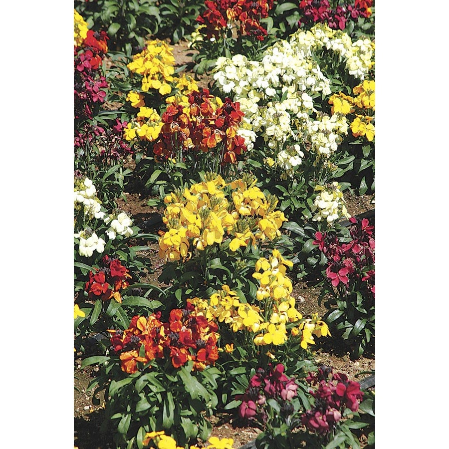 2.5-Quart Wallflower (LW04008)