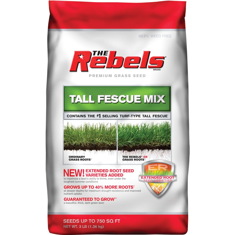 Rebel Premium 3-lb Tall Fescue Grass Seed