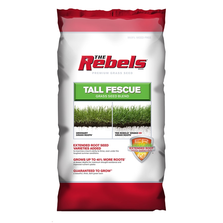 Rebel Premium 40-lb Tall Fescue Grass Seed