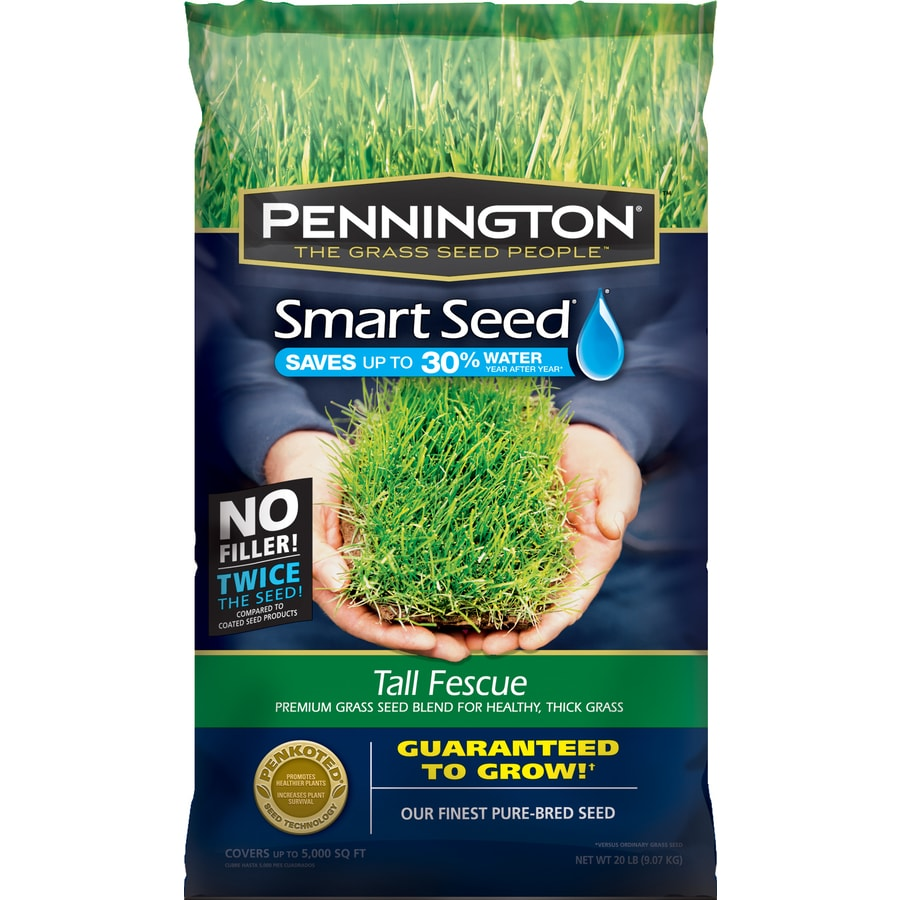 Pennington Smart Seed 20-lb Tall Fescue Grass Seed