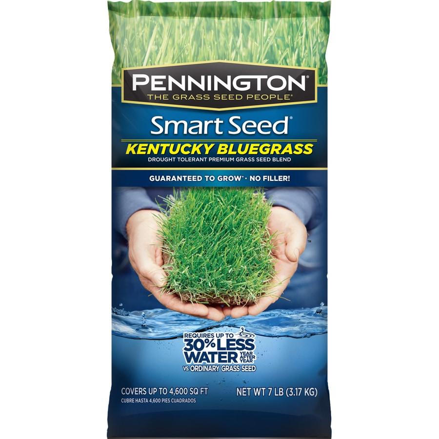 Pennington Smart Seed 7-lb Bluegrass Seed