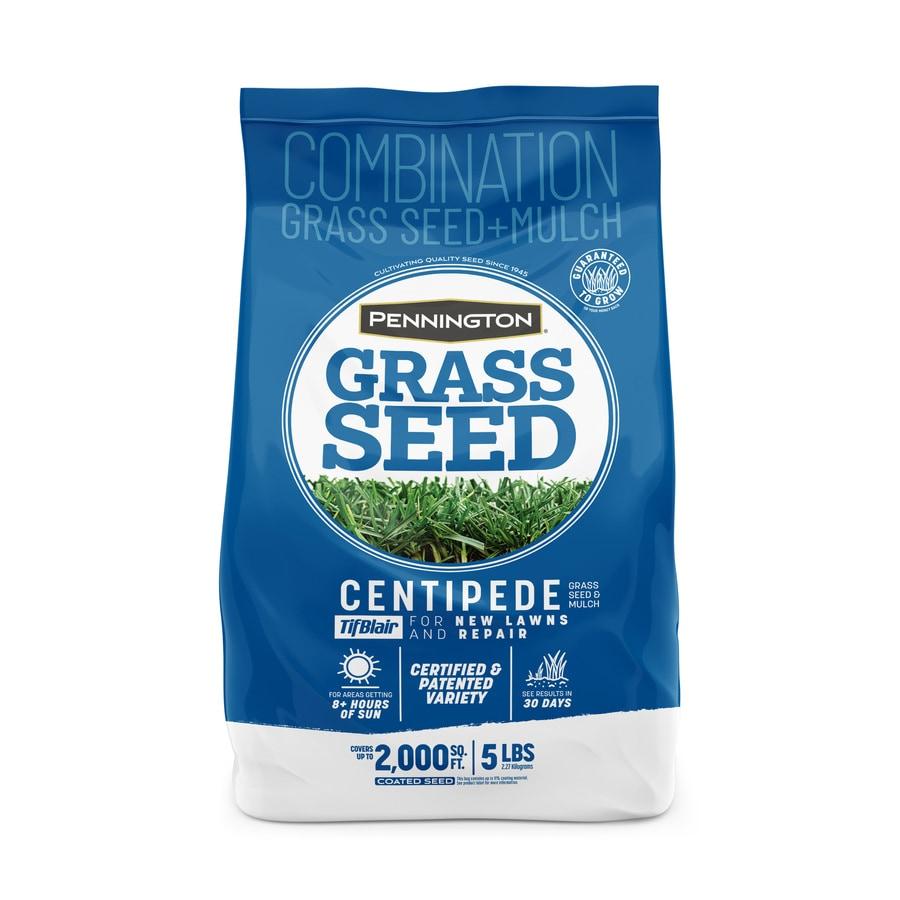 2 Lbs. Tifblair Centipede Grass Seed