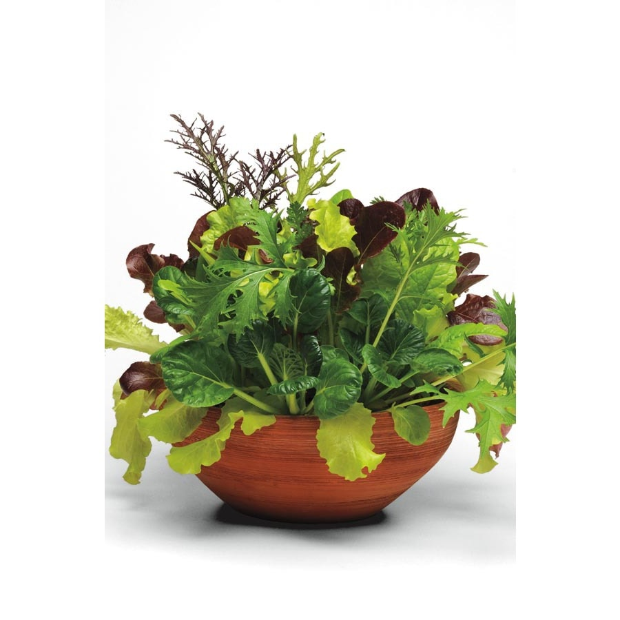 1.25-Gallon Simply Salad Global Gourmet Blend Lettuce Plant (Lb21826)