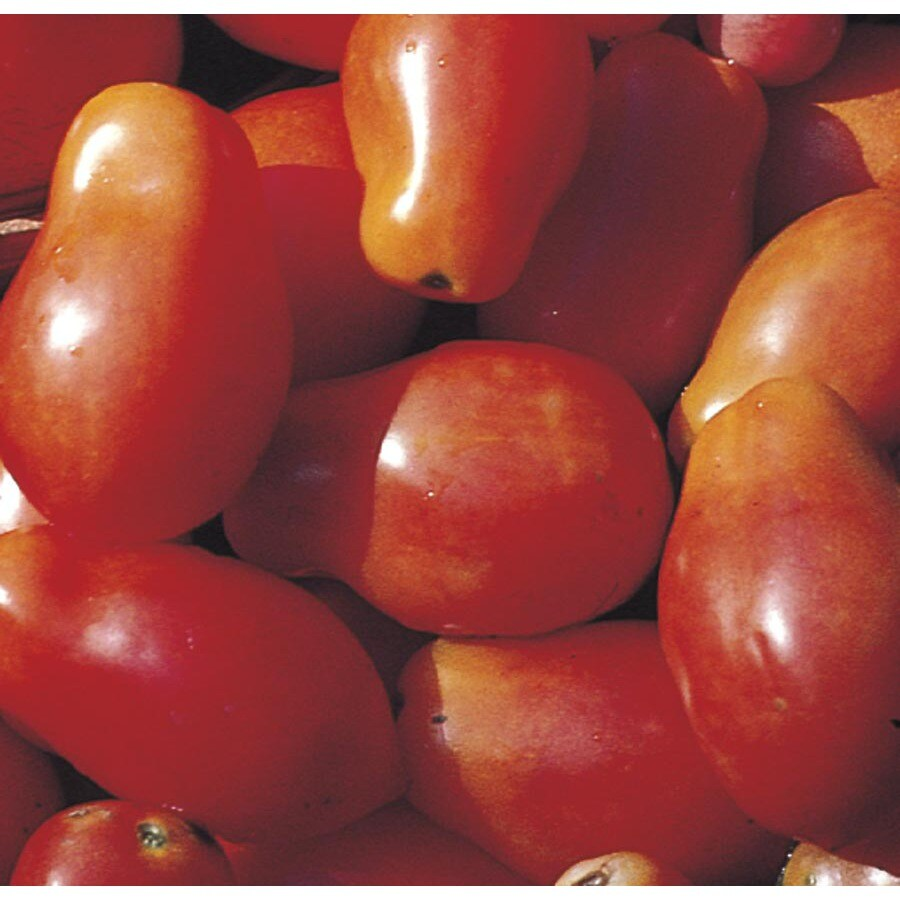 1.5-Gallon Tomato Assortment Plant (L14917)