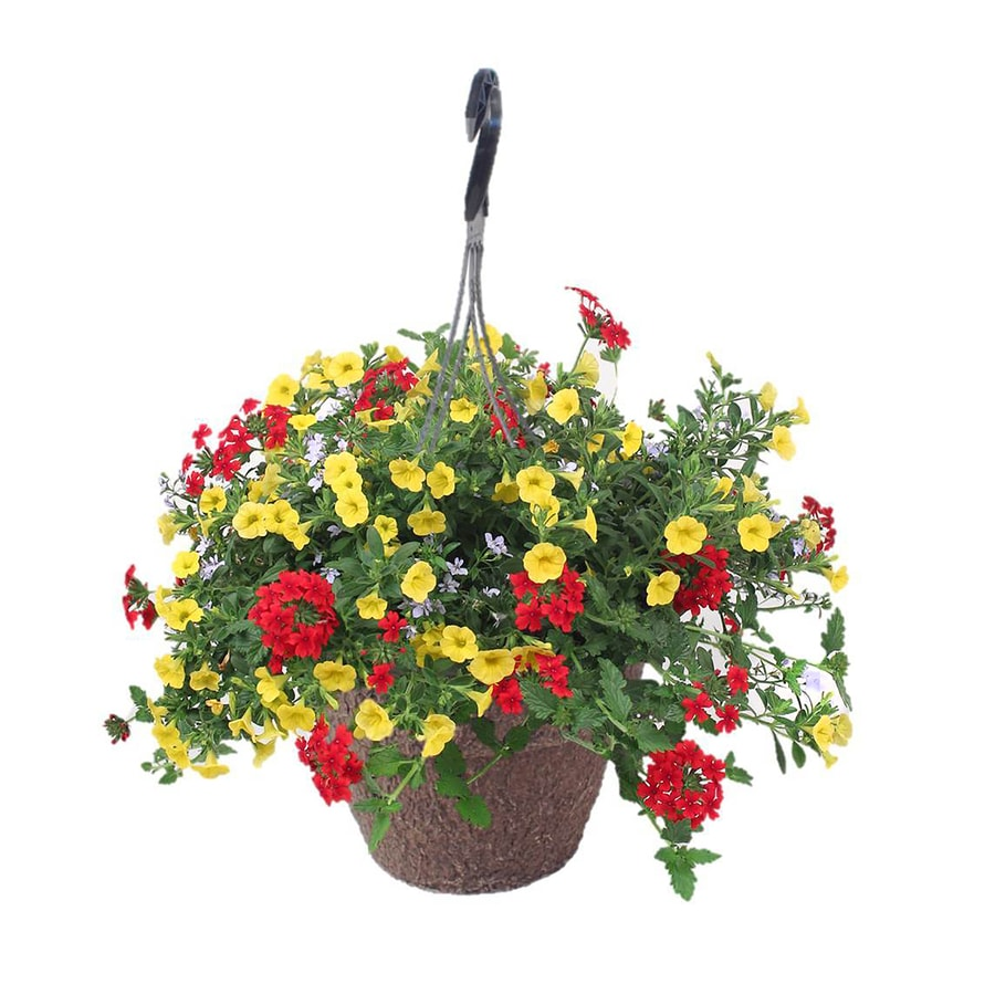 2-Gallon Hanging Basket Annuals