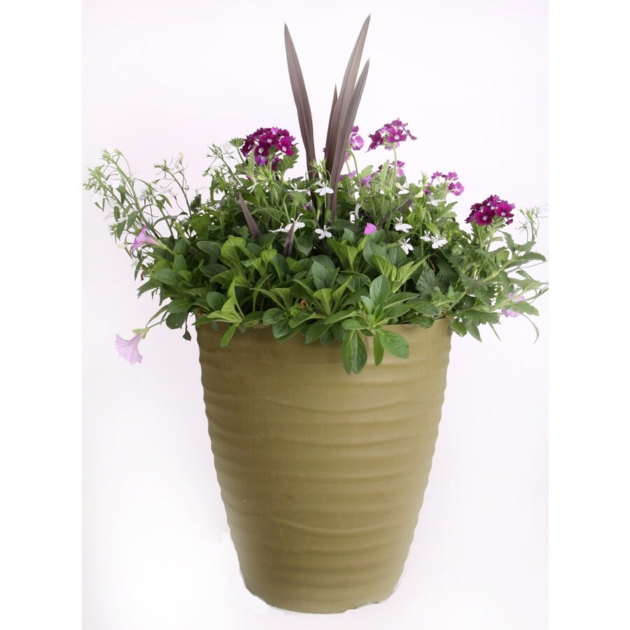 18-in x 12-in Matte Black Plastic Planter