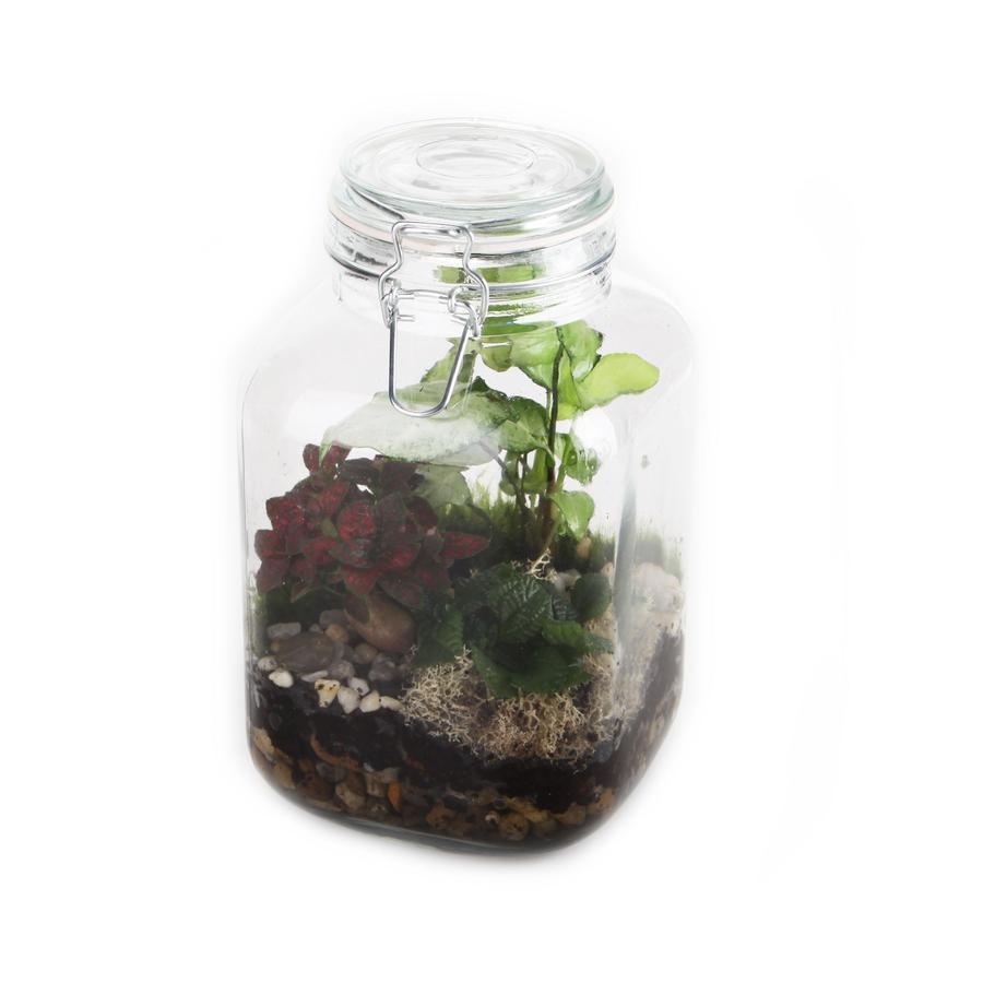 5.5-in Terrarium in Planter (Sterr)